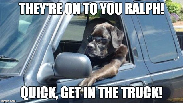 dog in truck | THEY'RE ON TO YOU RALPH! QUICK, GET IN THE TRUCK! | image tagged in dog in truck | made w/ Imgflip meme maker