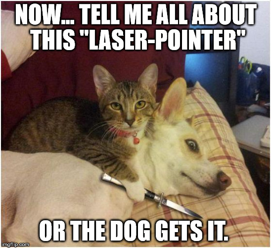 "Warning killer cat | NOW... TELL ME ALL ABOUT THIS ""LASER-POINTER"" OR THE DOG GETS IT. 