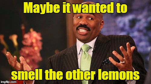 Steve Harvey Meme | Maybe it wanted to smell the other lemons | image tagged in memes,steve harvey | made w/ Imgflip meme maker