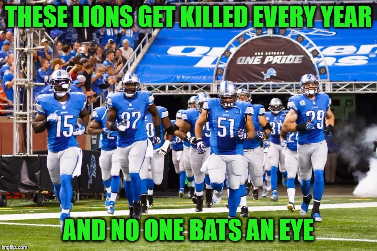 THESE LIONS GET KILLED EVERY YEAR AND NO ONE BATS AN EYE | made w/ Imgflip meme maker