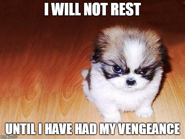 I WILL NOT REST UNTIL I HAVE HAD MY VENGEANCE | image tagged in puppy,vengeance,revenge,cute | made w/ Imgflip meme maker