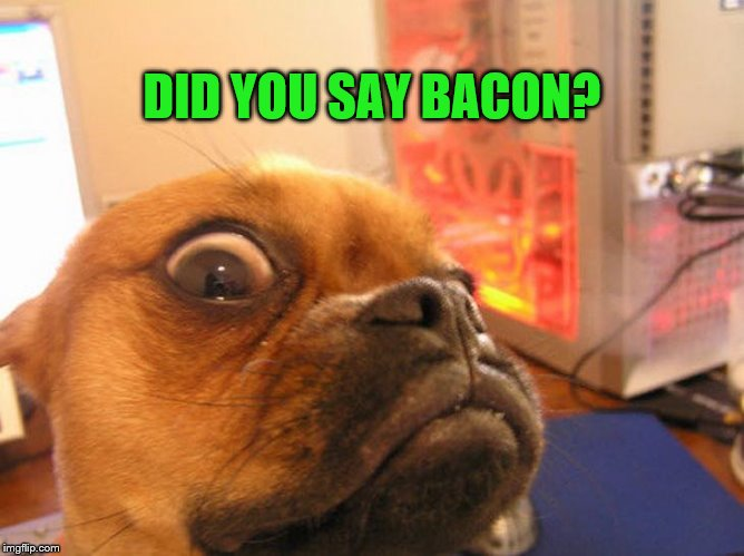 Did you say bacon dog | DID YOU SAY BACON? | image tagged in memes,meme,funny memes,dog likes bacon,shocked dog | made w/ Imgflip meme maker