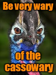 Be very wary of the cassowary | made w/ Imgflip meme maker