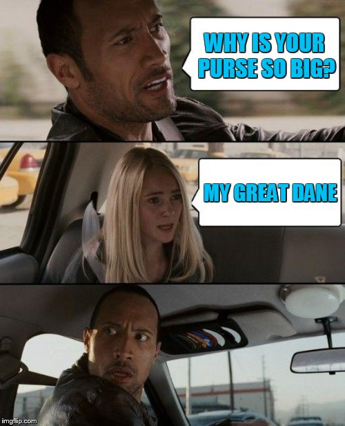 The Rock Driving Meme | WHY IS YOUR PURSE SO BIG? MY GREAT DANE | image tagged in memes,the rock driving | made w/ Imgflip meme maker