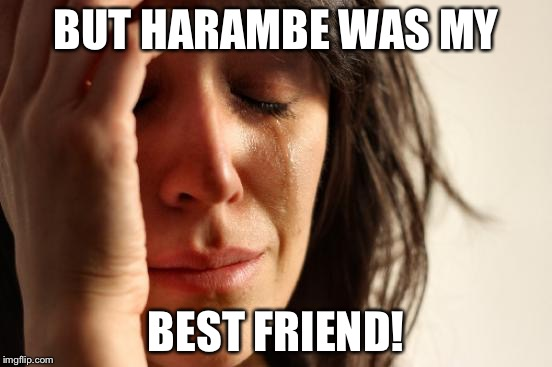 First World Problems Meme | BUT HARAMBE WAS MY BEST FRIEND! | image tagged in memes,first world problems | made w/ Imgflip meme maker