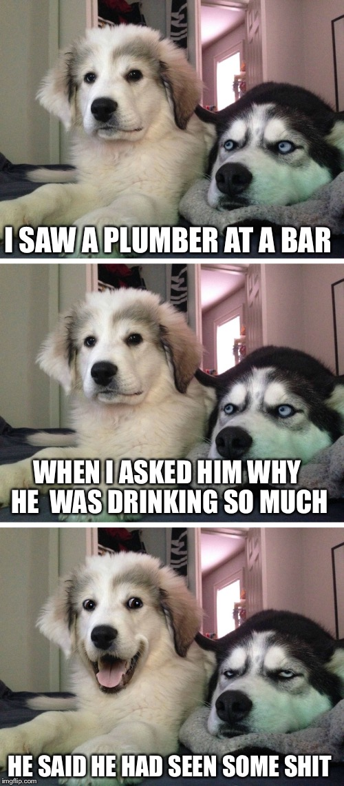 He can flush those memories away! | I SAW A PLUMBER AT A BAR WHEN I ASKED HIM WHY HE  WAS DRINKING SO MUCH HE SAID HE HAD SEEN SOME SHIT | image tagged in bad pun dogs | made w/ Imgflip meme maker