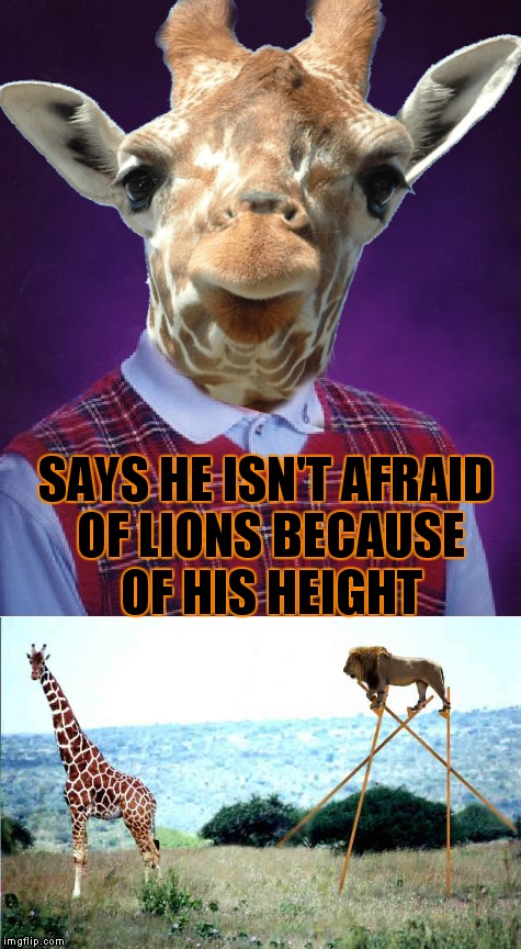 Just had to taunt the lion didn't ya... | SAYS HE ISN'T AFRAID OF LIONS BECAUSE OF HIS HEIGHT | image tagged in bad luck brian,giraffe,noob jungler | made w/ Imgflip meme maker