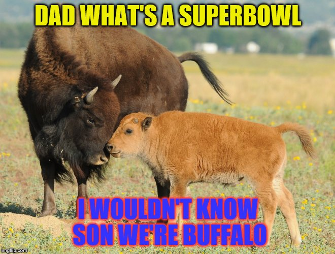 17 years and not even a playoff game | DAD WHAT'S A SUPERBOWL I WOULDN'T KNOW SON WE'RE BUFFALO | image tagged in memes,football,buffalo | made w/ Imgflip meme maker