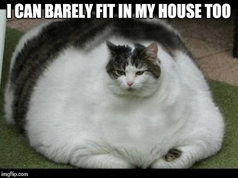 I CAN BARELY FIT IN MY HOUSE TOO | made w/ Imgflip meme maker