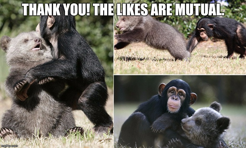 chimp & bear | THANK YOU! THE LIKES ARE MUTUAL. | image tagged in chimp  bear | made w/ Imgflip meme maker
