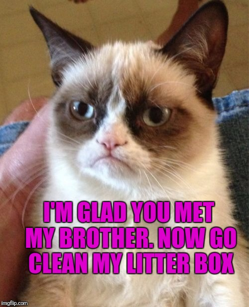 Grumpy Cat Meme | I'M GLAD YOU MET MY BROTHER. NOW GO CLEAN MY LITTER BOX | image tagged in memes,grumpy cat | made w/ Imgflip meme maker