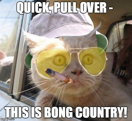 fear and loathing kitty | QUICK, PULL OVER - THIS IS BONG COUNTRY! | image tagged in fear and loathing kitty | made w/ Imgflip meme maker