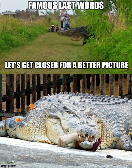 Yes get closer please! | FAMOUS LAST WORDS LET'S GET CLOSER FOR A BETTER PICTURE | image tagged in memes | made w/ Imgflip meme maker