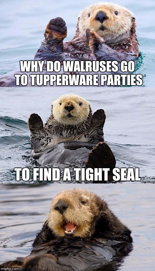 Bad pun otter |  WHY DO WALRUSES GO TO TUPPERWARE PARTIES; TO FIND A TIGHT SEAL | image tagged in bad pun otter | made w/ Imgflip meme maker