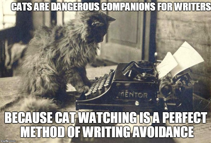 CATS ARE DANGEROUS COMPANIONS FOR WRITERS; BECAUSE CAT WATCHING IS A PERFECT METHOD OF WRITING AVOIDANCE | image tagged in writing,cats,writers | made w/ Imgflip meme maker