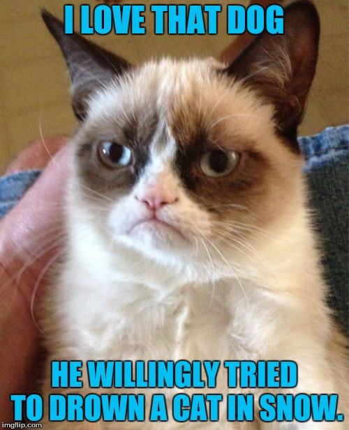 Grumpy Cat Meme | I LOVE THAT DOG HE WILLINGLY TRIED TO DROWN A CAT IN SNOW. | image tagged in memes,grumpy cat | made w/ Imgflip meme maker