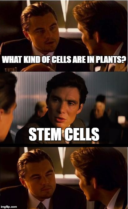 This is what happened in Biology today... |  WHAT KIND OF CELLS ARE IN PLANTS? STEM CELLS | image tagged in memes,inception,plants,funny,school,teacher | made w/ Imgflip meme maker