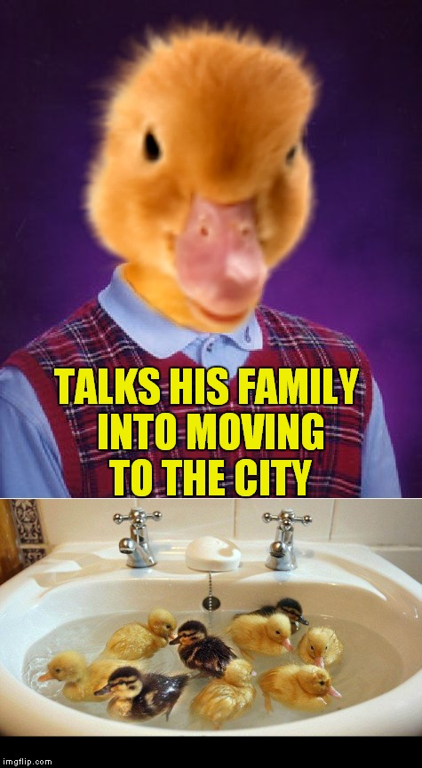 I simply couldn't ducking help making this... | TALKS HIS FAMILY INTO MOVING TO THE CITY | image tagged in bad luck,duck,ducking funny | made w/ Imgflip meme maker