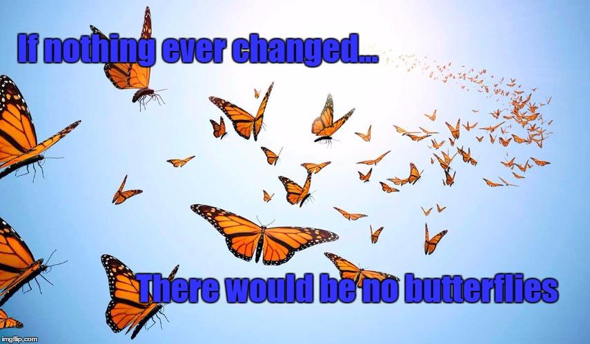 Butterflies - Imgflip