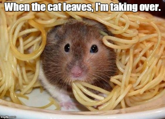 Spaghetti | When the cat leaves, I'm taking over. | image tagged in spaghetti | made w/ Imgflip meme maker