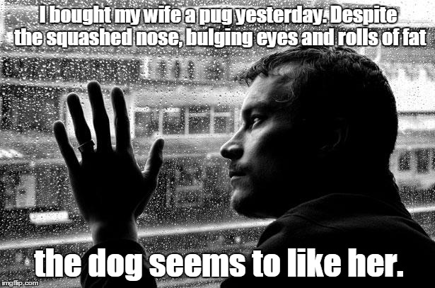 Over Educated Problems | I bought my wife a pug yesterday. Despite the squashed nose, bulging eyes and rolls of fat the dog seems to like her. | image tagged in memes,over educated problems | made w/ Imgflip meme maker