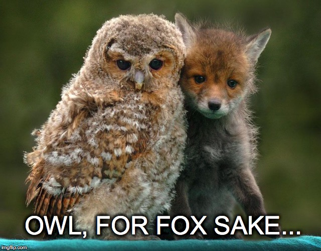 Aww, man... | OWL, FOR FOX SAKE... | image tagged in janey mack meme,flirty meme,funny,owl for fox sake | made w/ Imgflip meme maker