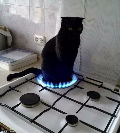 Hot Cat | . | image tagged in hot cat | made w/ Imgflip meme maker