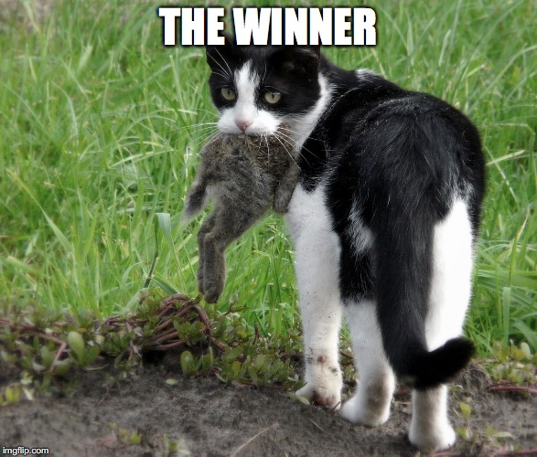 THE WINNER | made w/ Imgflip meme maker