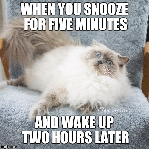 Oh no - aurorapurr | WHEN YOU SNOOZE FOR FIVE MINUTES AND WAKE UP TWO HOURS LATER | image tagged in cats,sleep | made w/ Imgflip meme maker