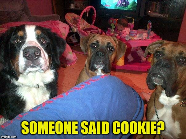 dogs | SOMEONE SAID COOKIE? | image tagged in dogs | made w/ Imgflip meme maker