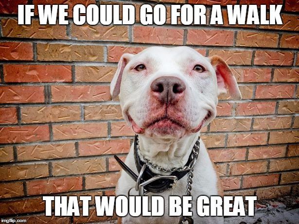IF WE COULD GO FOR A WALK THAT WOULD BE GREAT | image tagged in brinks | made w/ Imgflip meme maker