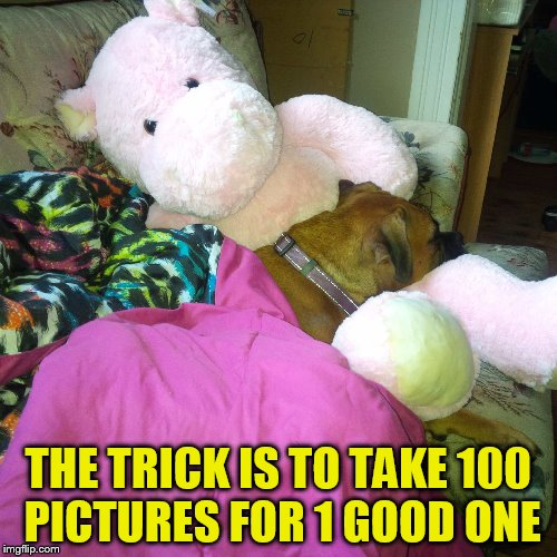 THE TRICK IS TO TAKE 100 PICTURES FOR 1 GOOD ONE | made w/ Imgflip meme maker