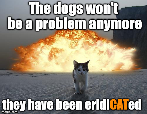 Dogs? What Dogs? | The dogs won't be a problem anymore they have been eridiCATed CAT | image tagged in memes,cats,animals,explosion,eridacated,boom | made w/ Imgflip meme maker