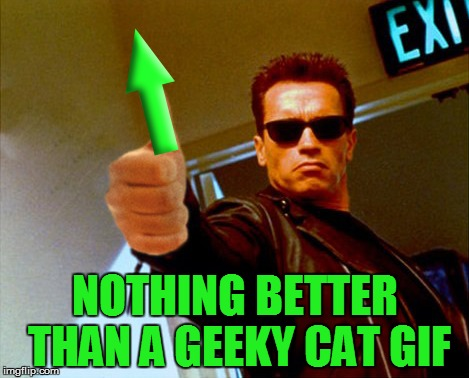NOTHING BETTER THAN A GEEKY CAT GIF | made w/ Imgflip meme maker