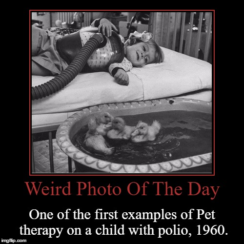 I'm Going To Guess They Are Ducks | Weird Photo Of The Day | One of the first examples of Pet therapy on a child with polio, 1960. | image tagged in funny,demotivationals,weird,photo of the day,animals,polio | made w/ Imgflip demotivational maker