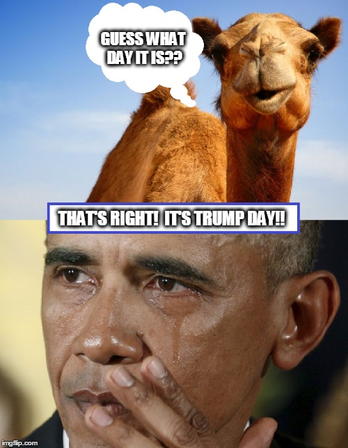 Guess What Day it is??? | GUESS WHAT DAY IT IS?? THAT'S RIGHT!  IT'S TRUMP DAY!! | image tagged in trump,obama,political humor,funny,inauguration,hump day camel | made w/ Imgflip meme maker