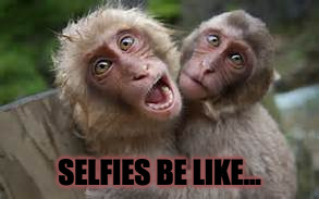 Image tagged in monkey,selfies,funny,memes,girls be like