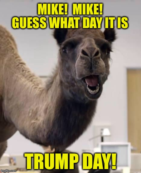 Mike! | MIKE!  MIKE! TRUMP DAY! GUESS WHAT DAY IT IS | image tagged in camel,trump,inauguration day | made w/ Imgflip meme maker