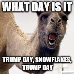 Camel | WHAT DAY IS IT TRUMP DAY, SNOWFLAKES, TRUMP DAY | image tagged in camel | made w/ Imgflip meme maker