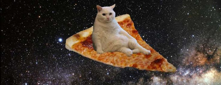 1i1gnp pizza cat blank template imgflip,Pizza Cat Meme