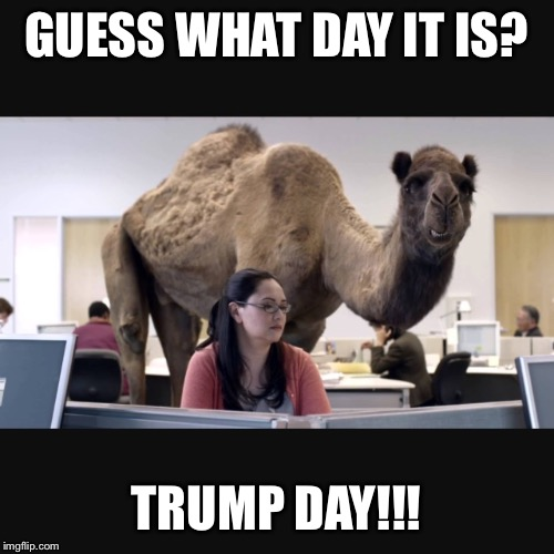 Trump day! | GUESS WHAT DAY IT IS? TRUMP DAY!!! | image tagged in hump day,memes,hump day camel,donald trump | made w/ Imgflip meme maker
