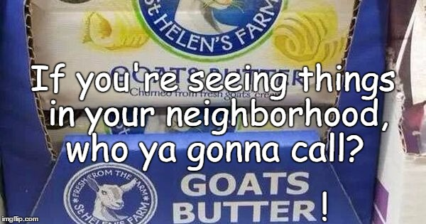 Who ya gonna call?  | If you're seeing things in your neighborhood, who ya gonna call? ! | image tagged in ghostbusters 2 | made w/ Imgflip meme maker