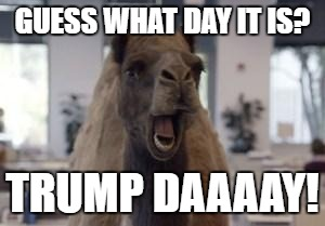 Hump Day Camel | GUESS WHAT DAY IT IS? TRUMP DAAAAY! | image tagged in hump day camel | made w/ Imgflip meme maker