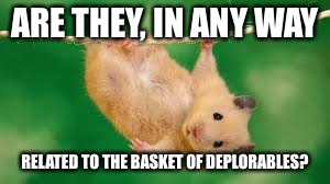 ARE THEY, IN ANY WAY RELATED TO THE BASKET OF DEPLORABLES? | made w/ Imgflip meme maker
