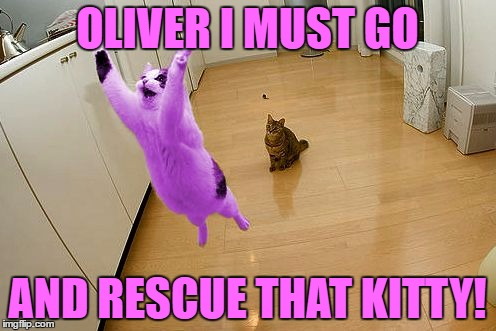 RayCat save the world | OLIVER I MUST GO AND RESCUE THAT KITTY! | image tagged in raycat save the world | made w/ Imgflip meme maker