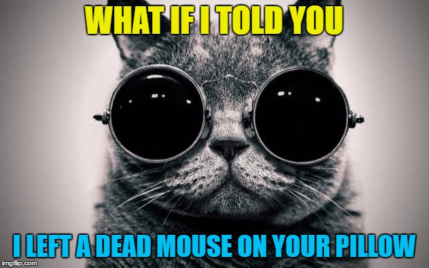 Who knew Morpheus had a cat? |  WHAT IF I TOLD YOU; I LEFT A DEAD MOUSE ON YOUR PILLOW | image tagged in cat-morpheus,memes,animals,cats,morpheus,what if i told you | made w/ Imgflip meme maker
