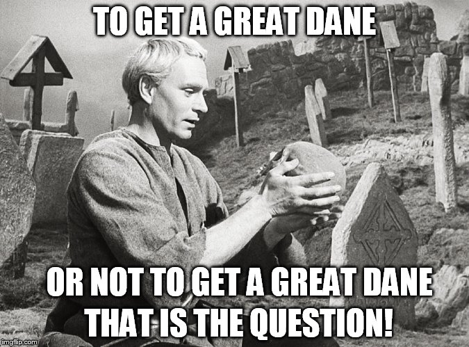 Hamlet | TO GET A GREAT DANE OR NOT TO GET A GREAT DANE THAT IS THE QUESTION! | image tagged in hamlet | made w/ Imgflip meme maker