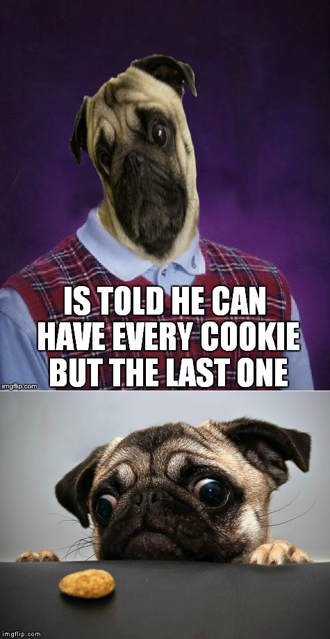Missing the user Googol :( | IS TOLD HE CAN HAVE EVERY COOKIE BUT THE LAST ONE | image tagged in bad luck,pug,cute,dog | made w/ Imgflip meme maker