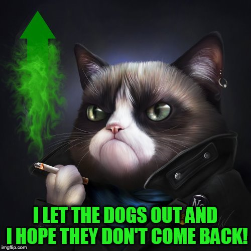 I LET THE DOGS OUT AND I HOPE THEY DON'T COME BACK! | made w/ Imgflip meme maker