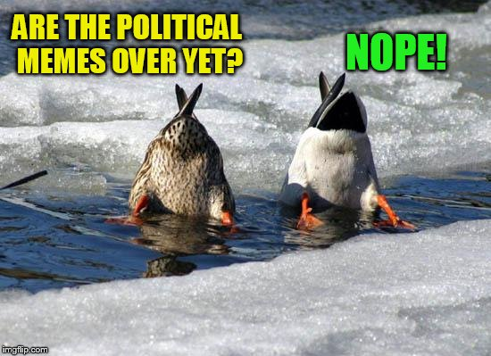 A Wakester Template | ARE THE POLITICAL MEMES OVER YET? NOPE! | image tagged in political meme,memes,wakester,new template,ducks,funny | made w/ Imgflip meme maker